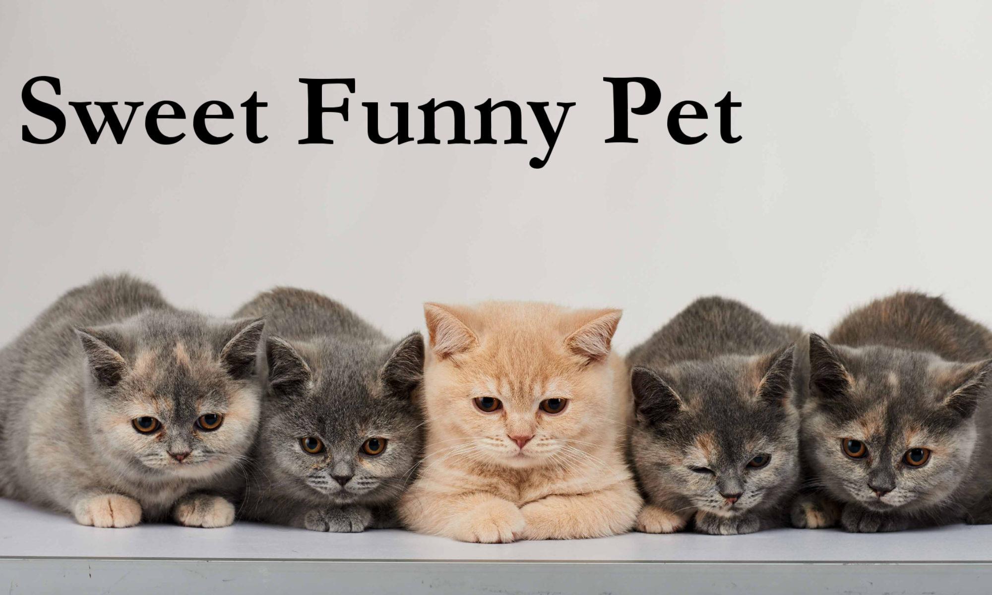 Sweet Funny Pet